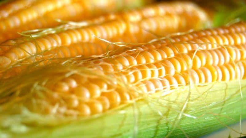 Кукуруза — википедия. что такое кукуруза