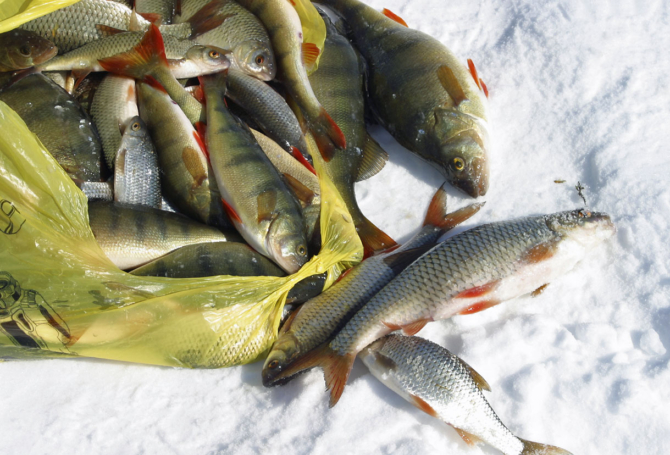 Про рыбалку - секреты рыбной ловли   снасти, приманки и прикормки. активаторы клева. рыболовные узлы