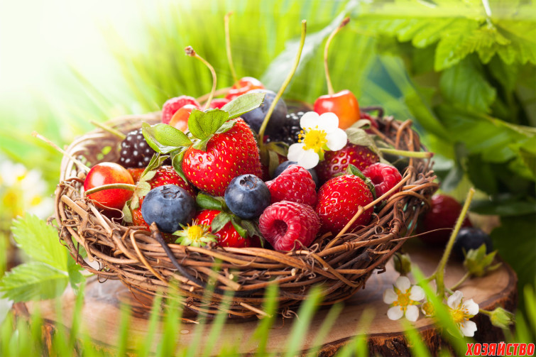 Чем ягоды отличаются от фруктов?