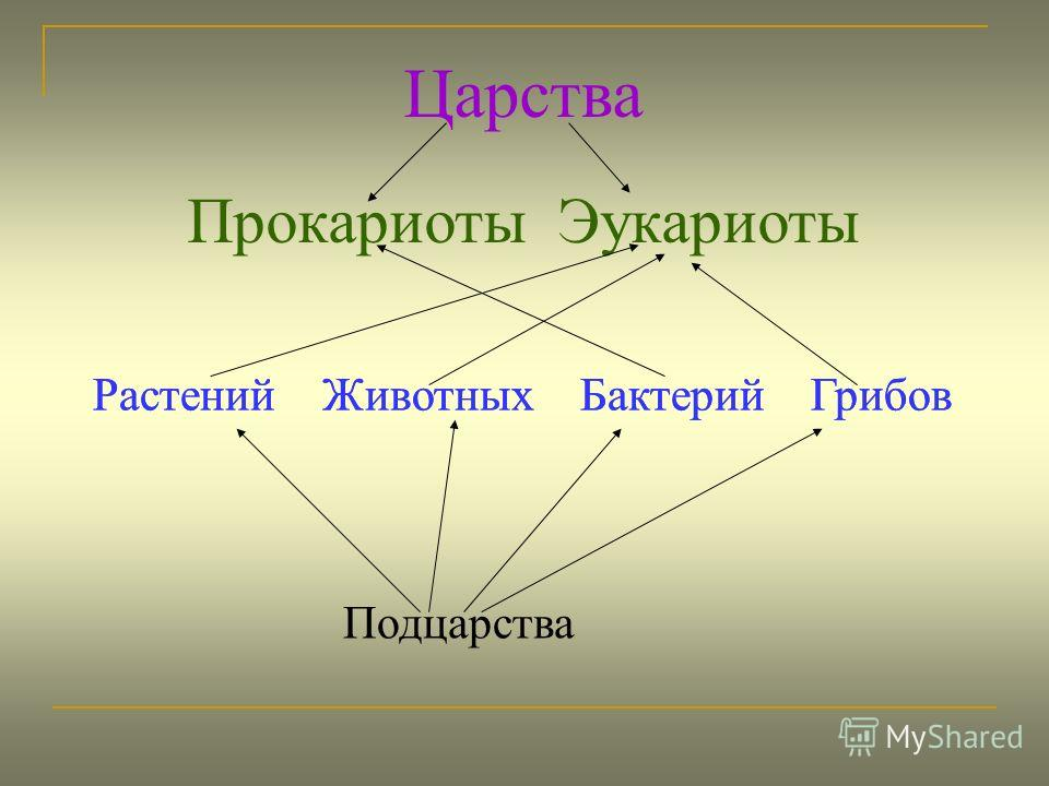 Прокариоты и эукариоты что это за клетки и чем они отличаются друг от друга