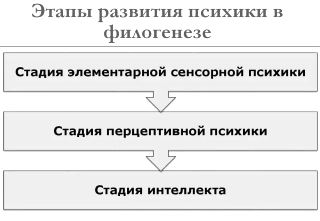 Филогенез - это сложный процесс