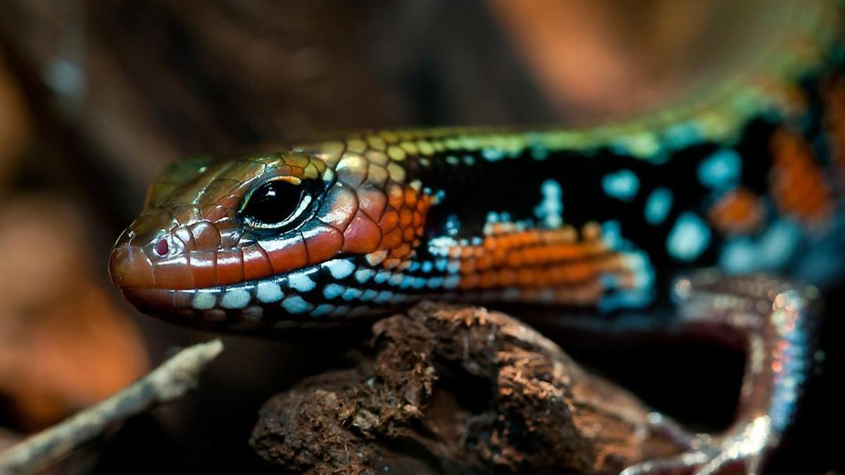 Список животных-рептилий: пресмыкающиеся, названия и характеристика видов, особенности размножения