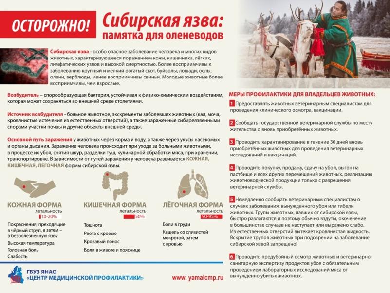 Сибирская язва: диагностика, лечение и профилактика