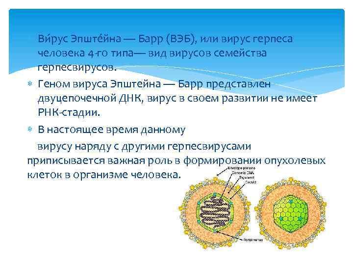 Что такое вирус эпштейна-барр — какие заболевания вызывает вэб-инфекция и как лечится