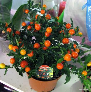 Растения семейства пасленовых: особенности, список с фото