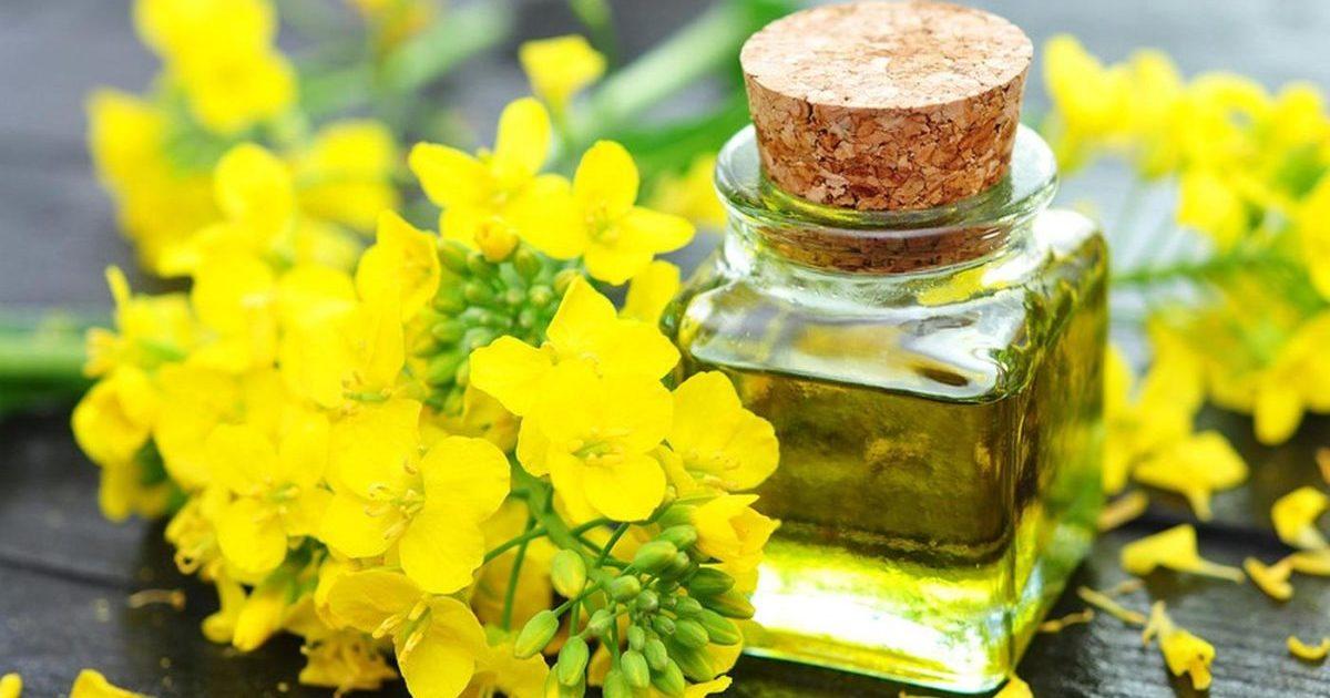 Рапсовое масло: свойства, противопоказания, применение, польза и вред