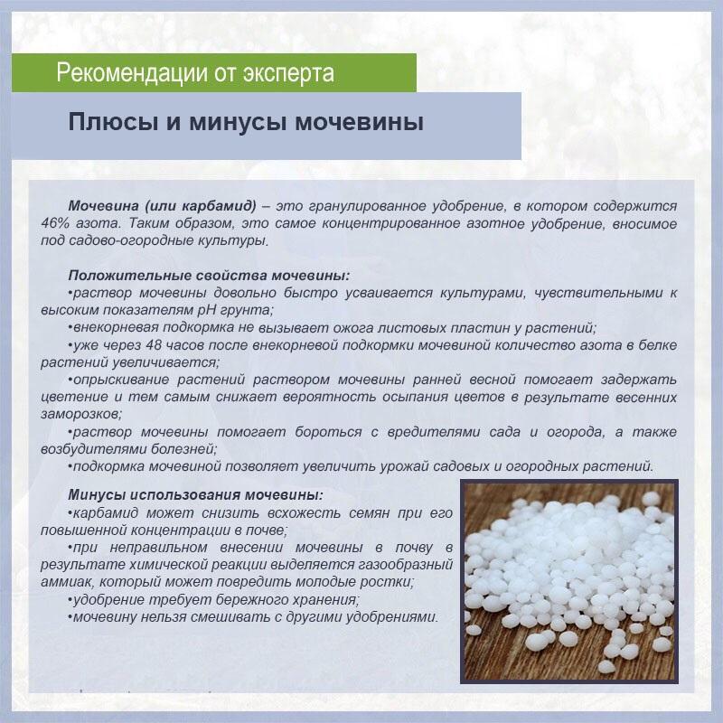 Мочевина (карбамид) как удобрение: применение в саду и огороде, состав, нормы внесения, инструкция, как разводить