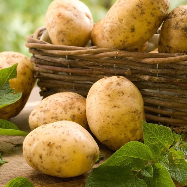 """Картофель """"анна"""""""