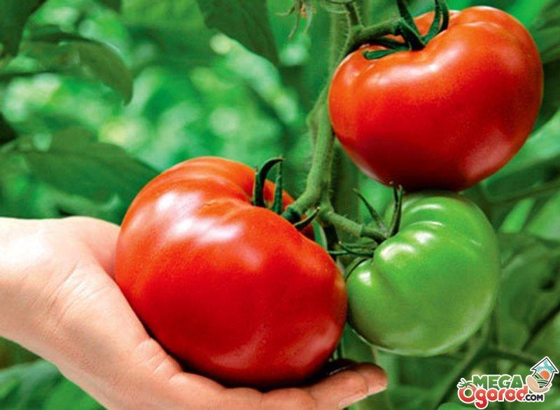 Вегетация растений — что это такое, сроки, управление вегетационным периодом