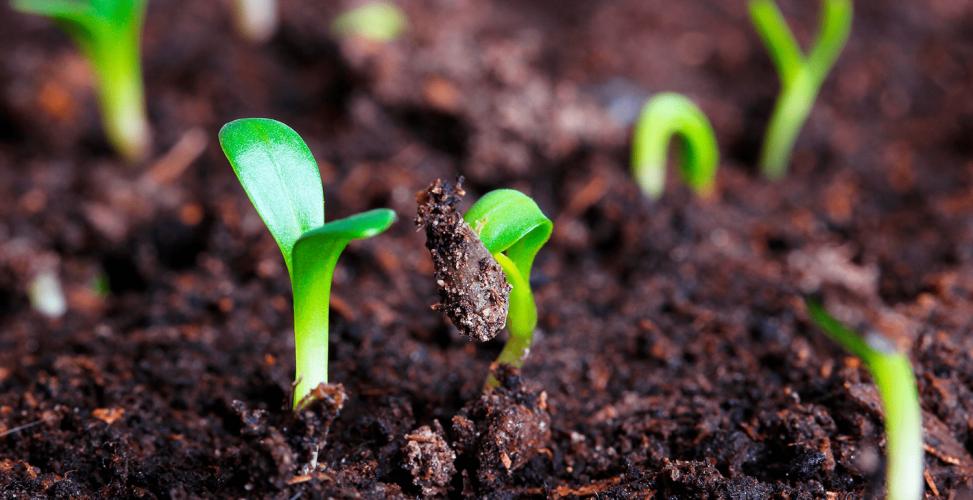 Виды и методы стратификации семян, ее роль для растений и как правильно стратифицировать холодным способом