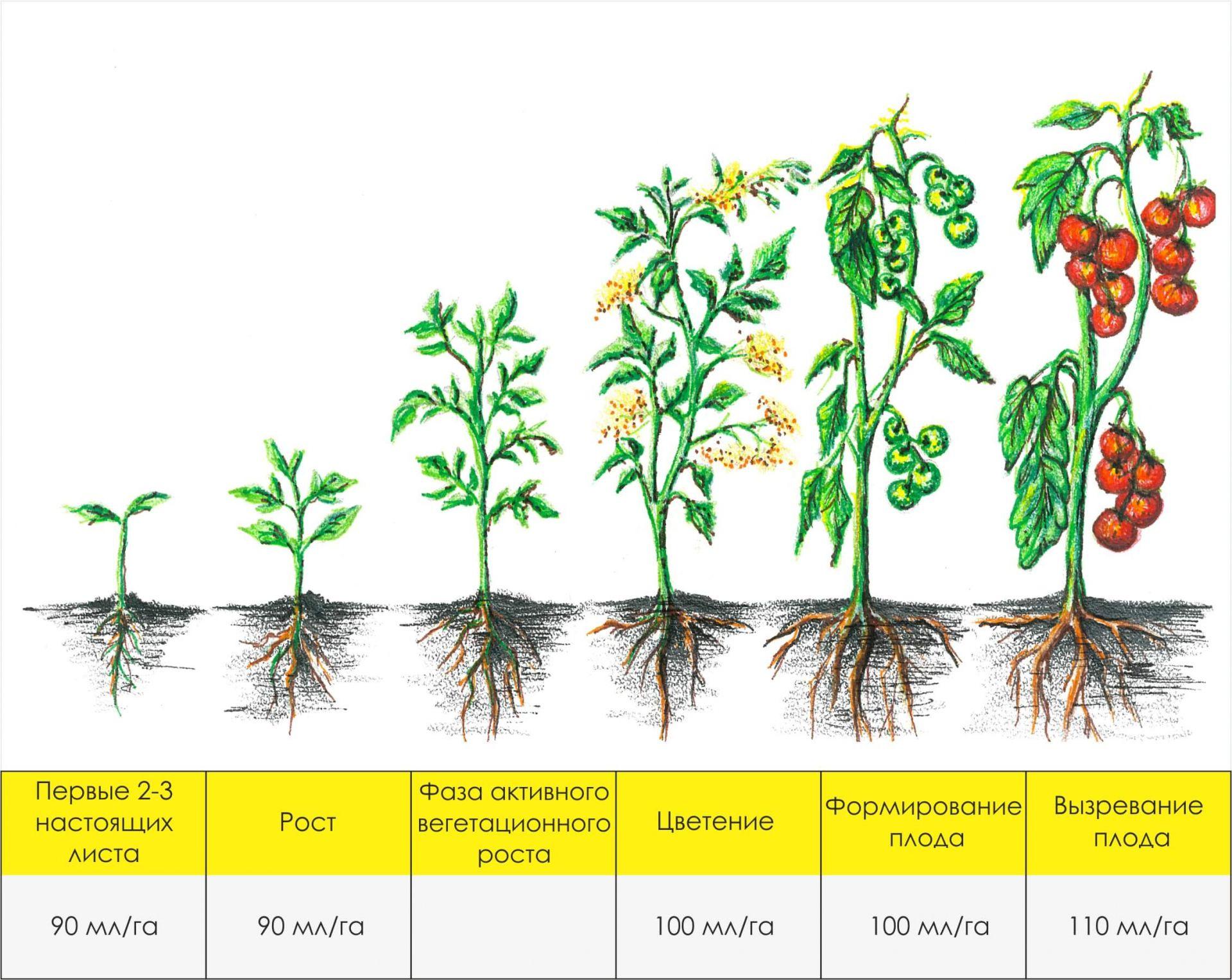 Что значит вегетация и вегетационный период растений: вегетативная продолжительность