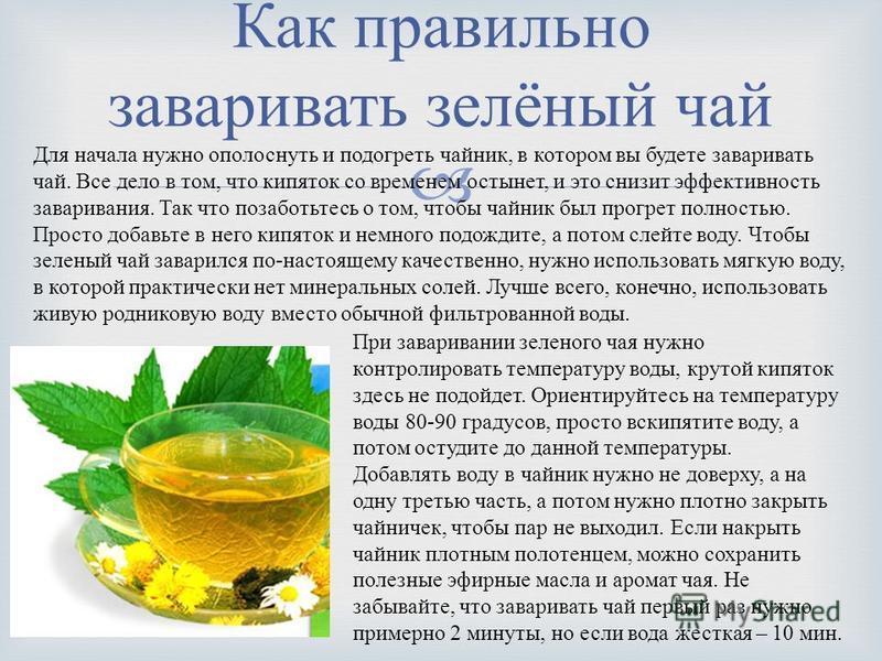 Чай с саусепом: польза и вред, особенности, как заваривать