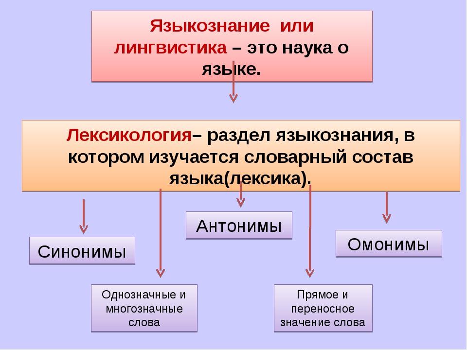 Лингвистика - что это за профессия: лингвист - это, плюсы и минусы, профессии, связанные с лингвистикой