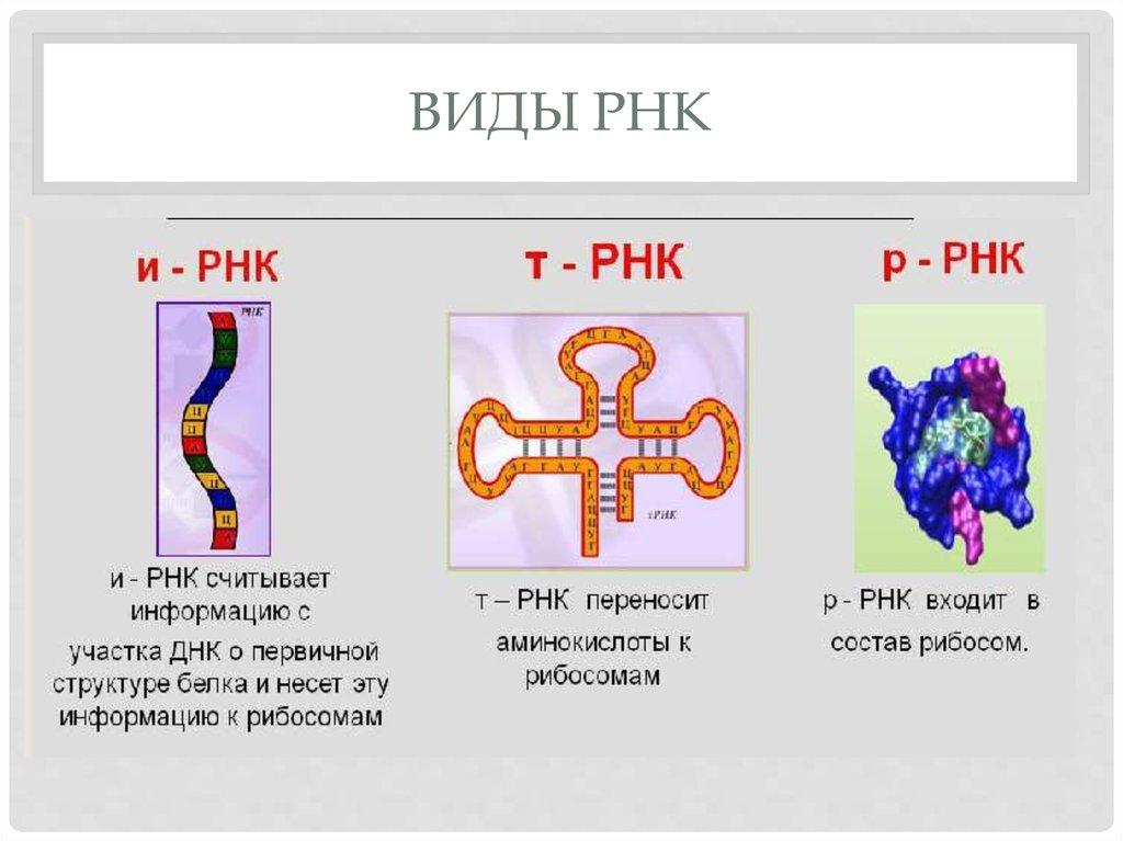Рнк-содержащие вирусы — википедия переиздание // wiki 2