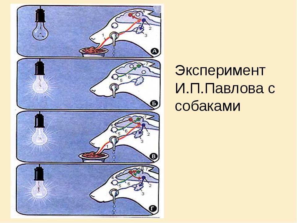 Эксперимент «собака павлова»