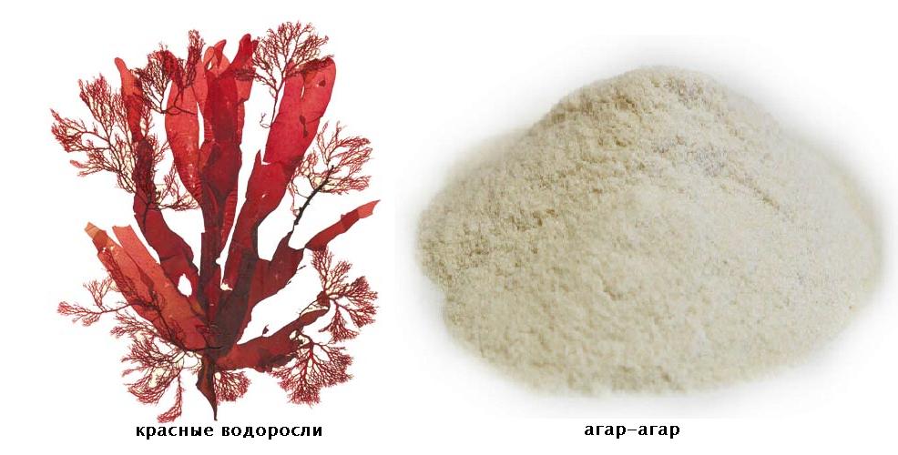 Чем можно заменить агар-агар: желирующие пищевые добавки