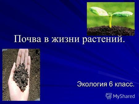 Что такое почва, состав, типы и виды, главное свойство почвы, строение, как образуется, обитатели почвенной среды, минерализация