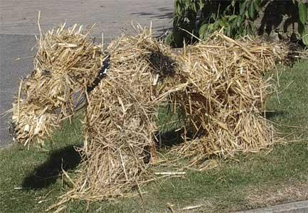 Сено и солома – учимся различать и использовать на огороде