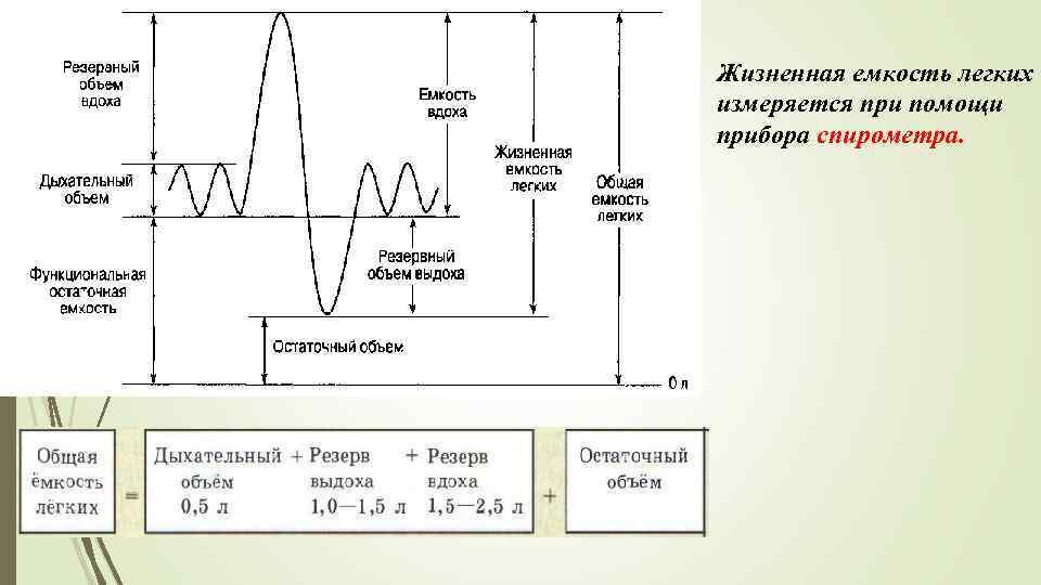 Что такое жизненная ёмкость легких, как её измеряют pulmono.ru что такое жизненная ёмкость легких, как её измеряют