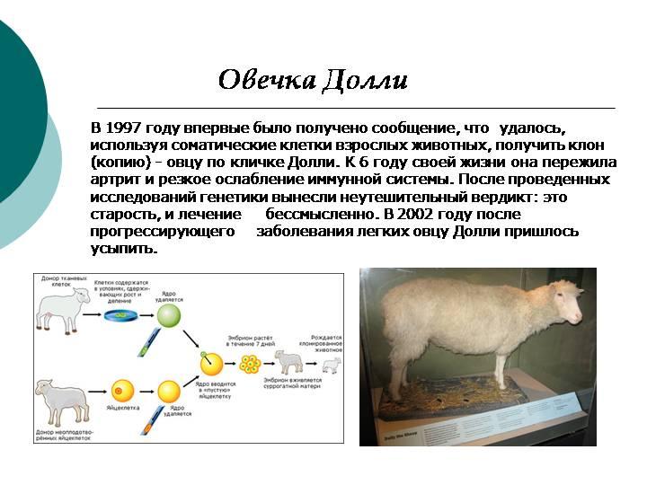 Что изменилось в мире клонирования со времён овечки долли