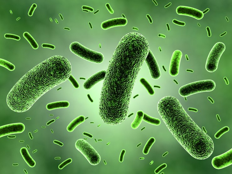 Палочка коха – к какой группе бактерий относится, как передается, как погибает?