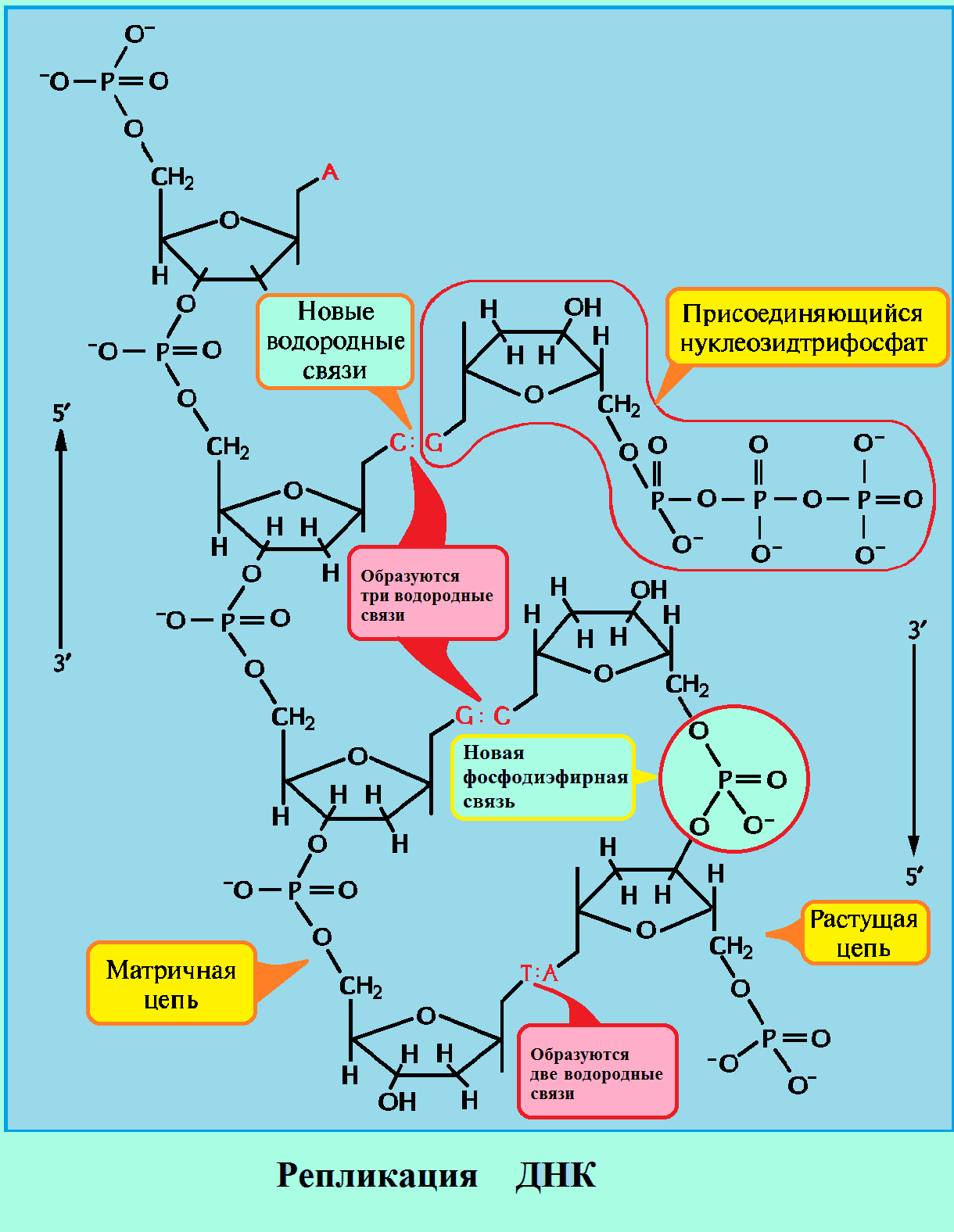 Как устроена mysql-репликация