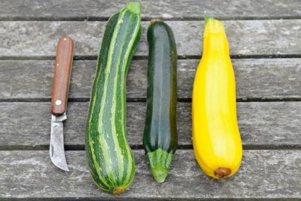Цукини – что это за овощ, польза и вред, как готовить вкусные блюда на сковороде, в духовке или мультиварке