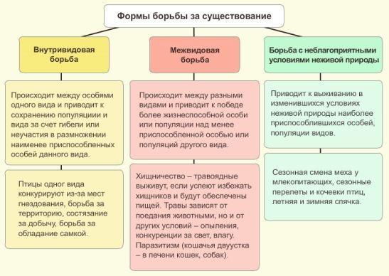 Самые яркие примеры конкуренции в природе :: businessman.ru