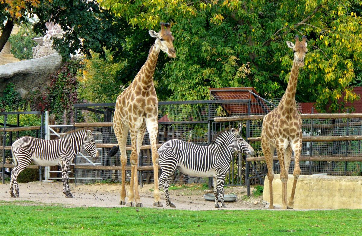 В каком режиме будет работать московский зоопарк с 16 июня – москва 24, 15.06.2020