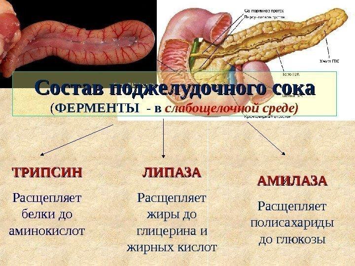 Липаза: что это, норма в крови, причины повышения и снижения