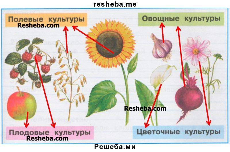 Культурные растения нашей планеты