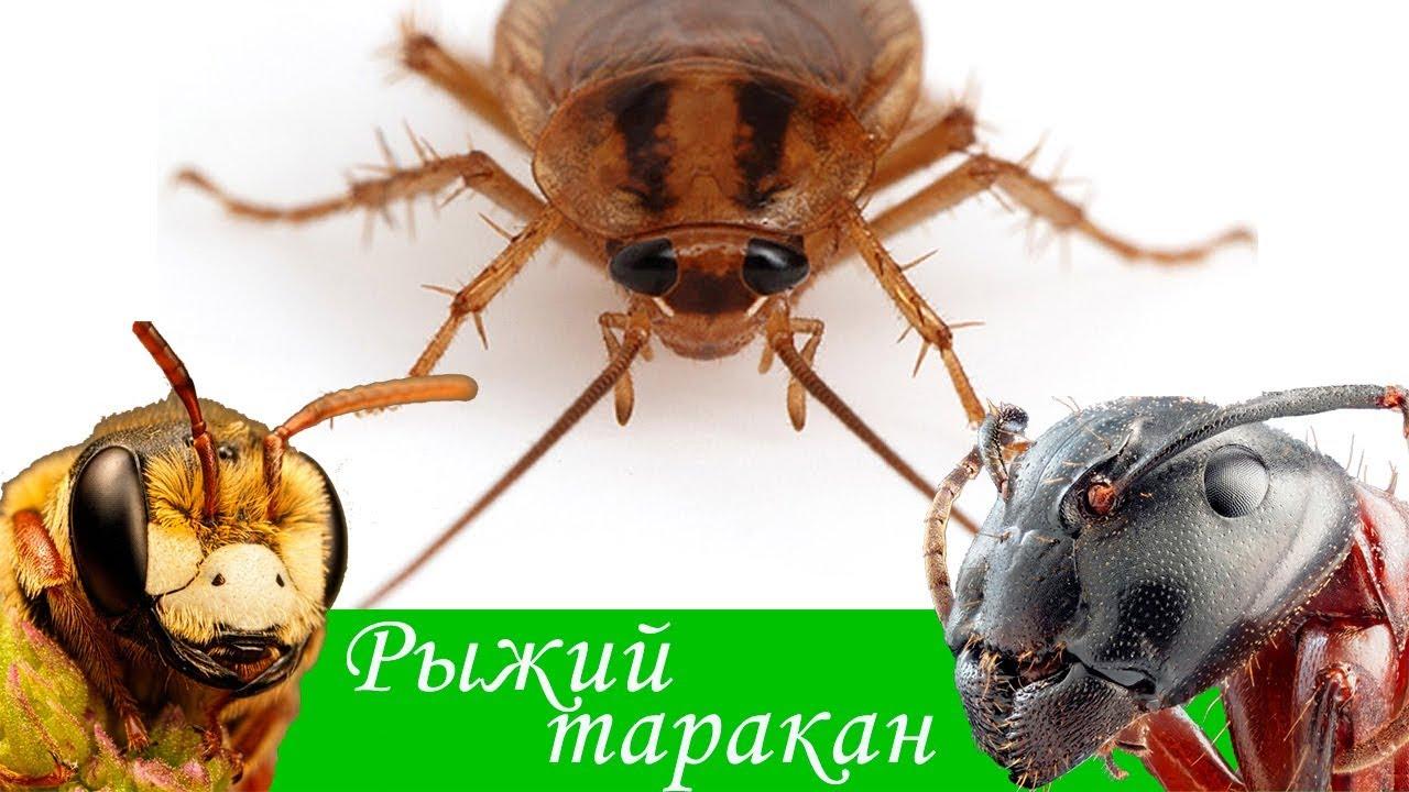 Значение слова «таракан»