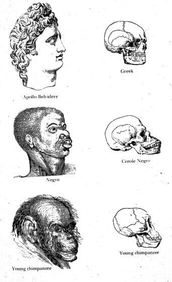 Что такое расизм простыми словами - определение, примеры
