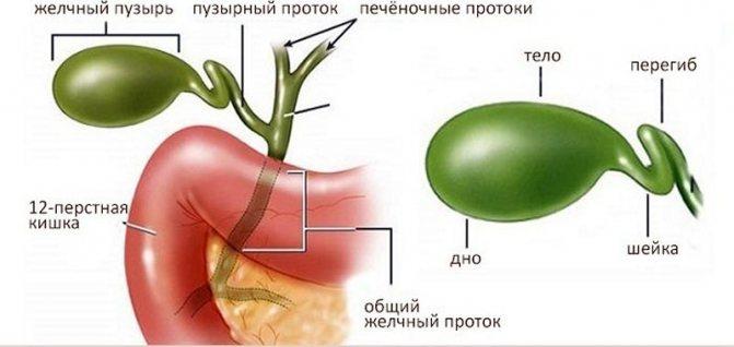Перегиб желчного пузыря: эффективное медикаментозное лечение