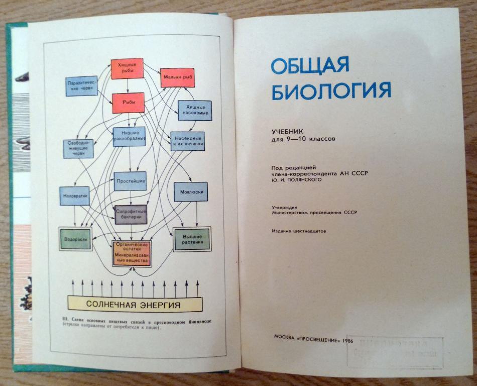 Самум - что это такое? значение слова, описание - gkd.ru