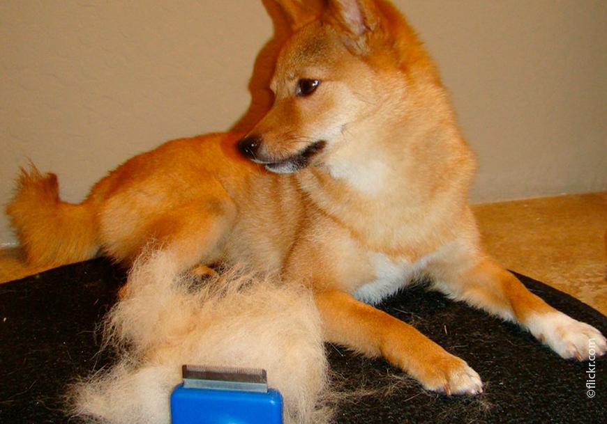 Фурминатор для собак: как правильно выбрать инструмент? ' собаки '