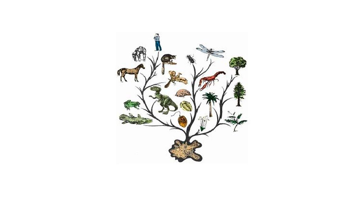 Эволюция живой природы. эволюционная теория. движущие силы эволюции.