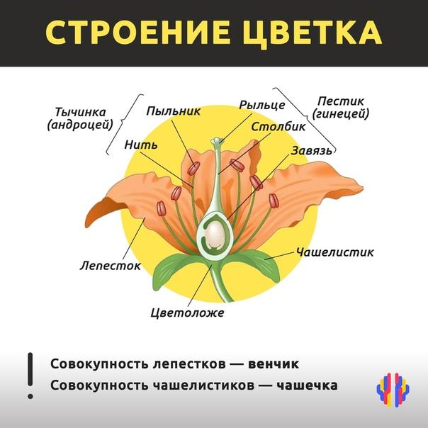 Bio-lessons