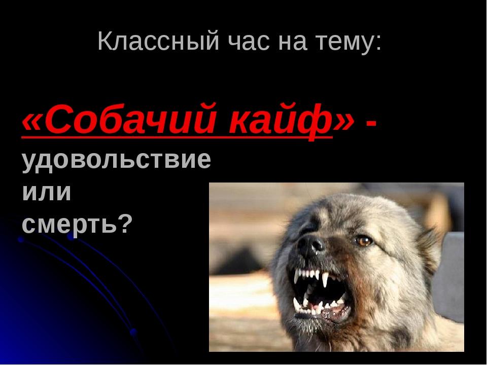 Собачий кайф