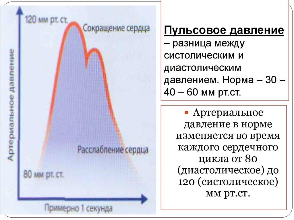 Систолическое и диастолическое давление: что это такое, за что отвечают, норма, чем отличаются и что означает разница между ними