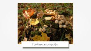 Что такое сапрофиты и чем они отличаются от паразитирующих бактерий | medded.ru