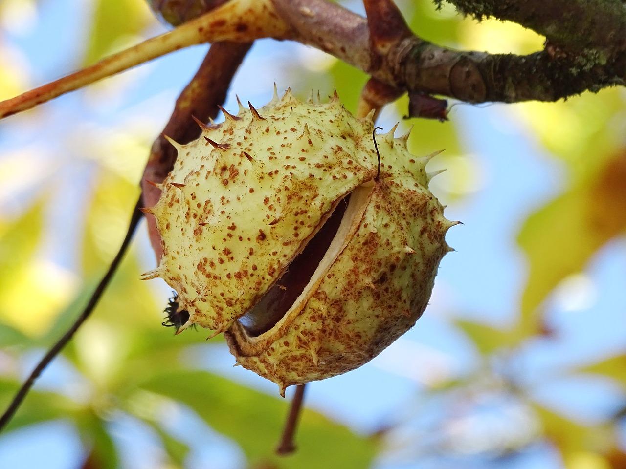 Плод — википедия. что такое плод