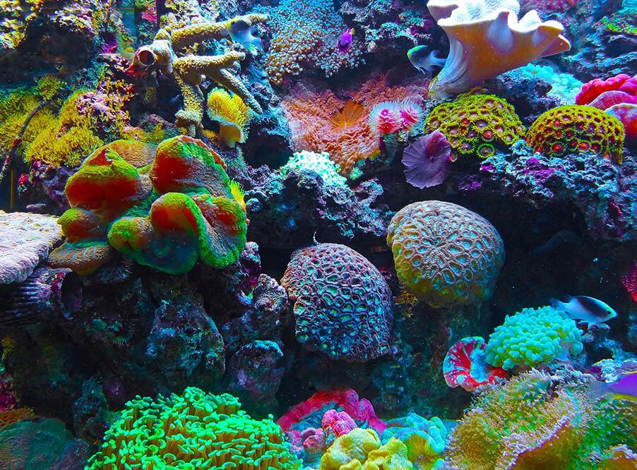 Риф — википедия. что такое риф