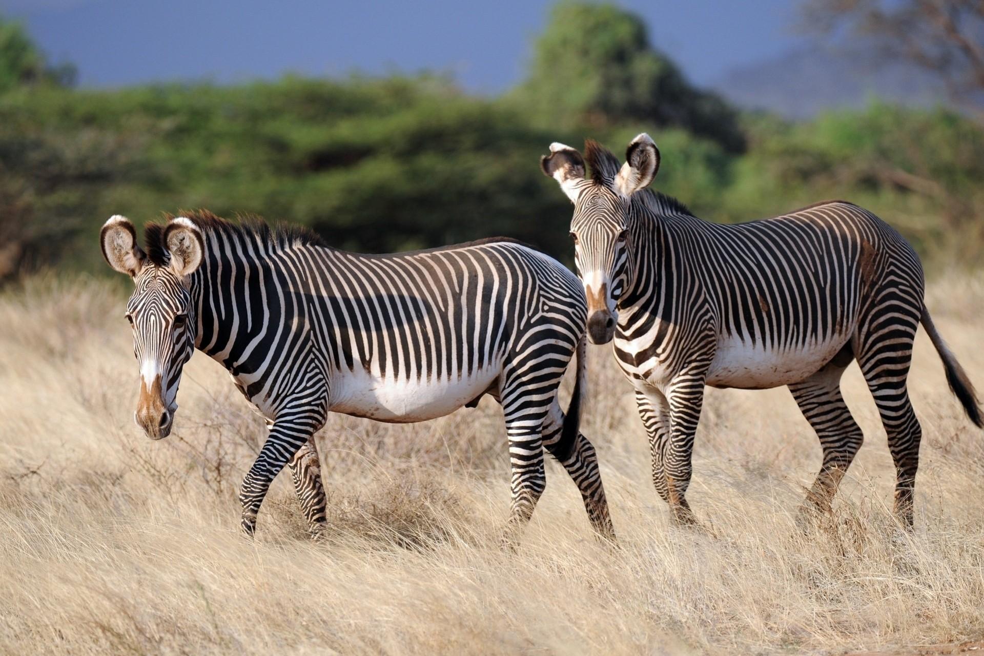 Все виды животных, определение и классификация, породы, среда обитания, их история, интересные факты о происхождении, питании и многое другое.