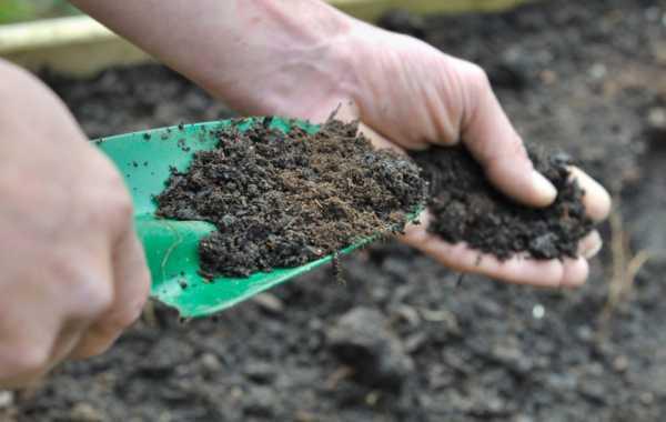 Торфогрунт: использование универсального торфяного грунта, питательный субстрат для рассады «агробалт-с» и другие смеси