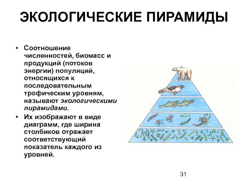 Экологическая пирамида болота. правило экологической пирамиды