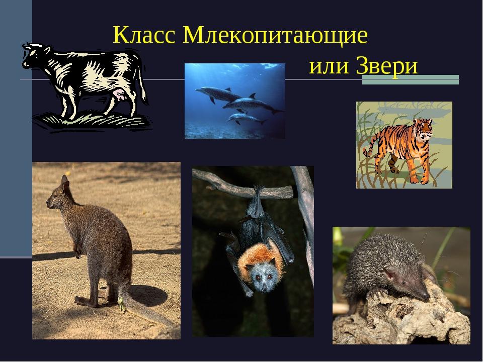 Млекопитающие - это какие животные? - энциклопедия для детей