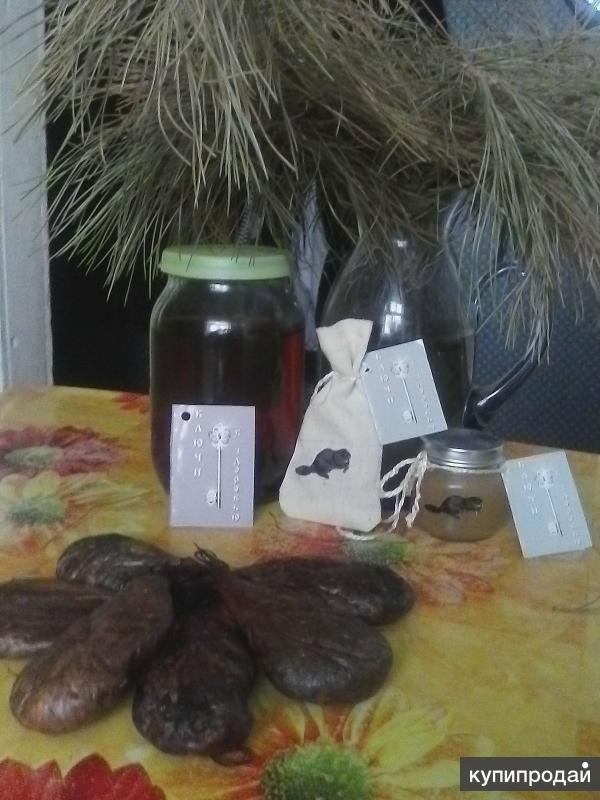 Как самостоятельно готовить настойку из бобровой струи?