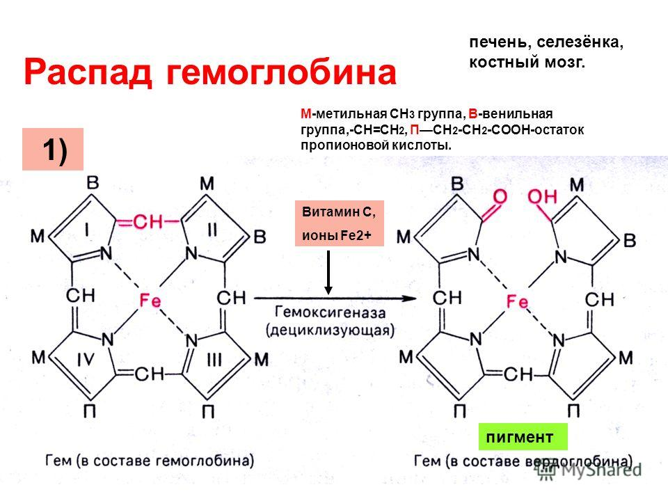 Разница между нуклеиновой кислотой и аминокислотой - разница между - 2020