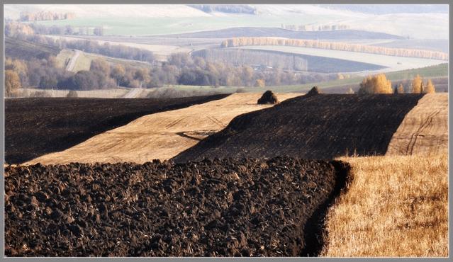 Чернозем, черноземные почвы, состав, как выбрать и применять